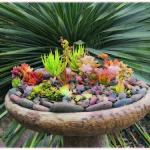 Succulent Container Gardens Plants