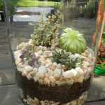 Succulent Garden Glass Container
