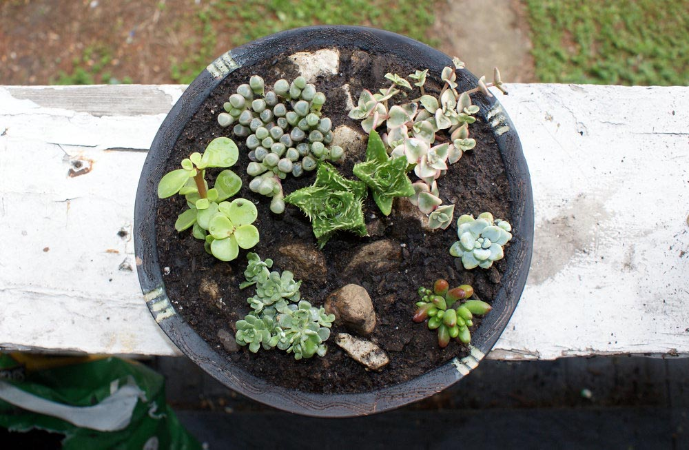 Succulent Garden Ideas Container
