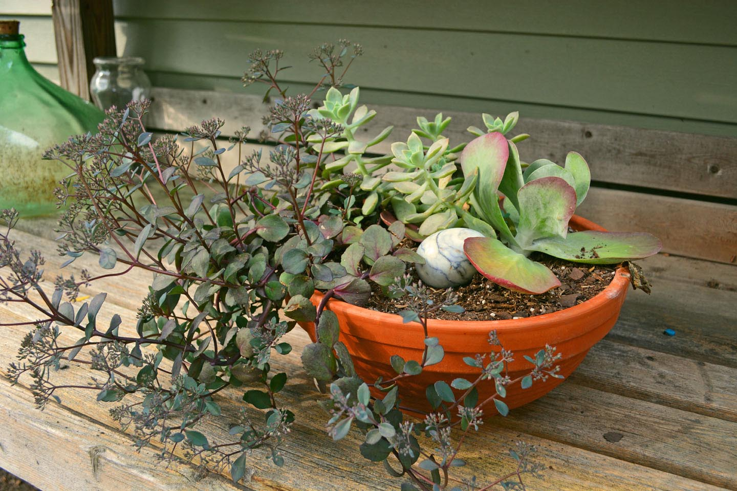 Succulent Gardens in Containers