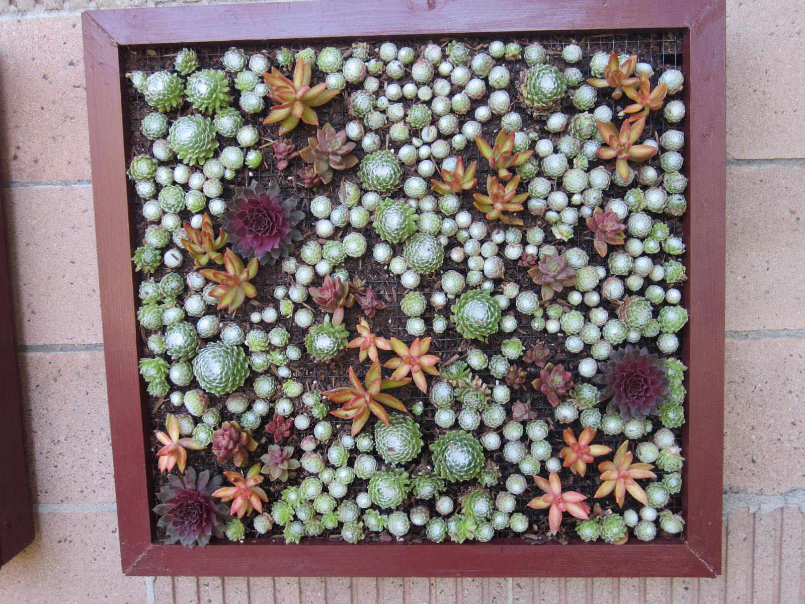 Succulent Vertical Garden Box