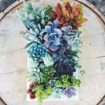 Succulent Vertical Garden Frame