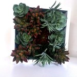 Succulent Vertical Garden Kit