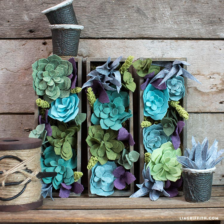 Succulents for Vertical Gardening