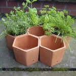 Terracotta Pot Herb Garden
