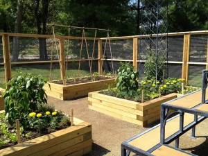 Vegetable Garden Along Fence