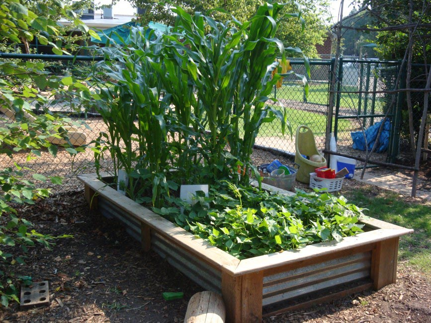 Vegetable Garden Bed Plans