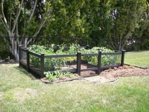 Vegetable Garden Fencing Design