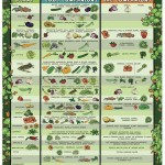 Vegetable Garden Planning Guide