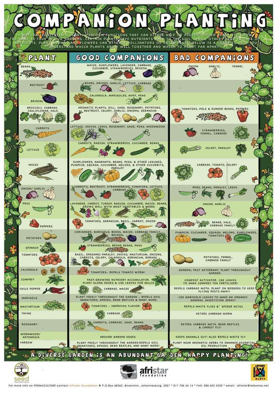 Vegetable Garden Planning Guide