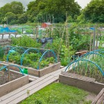 Vegetable Garden Plans Designs