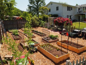 Vegetable Garden with Fence