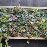 Vertical Garden Plants for Shade