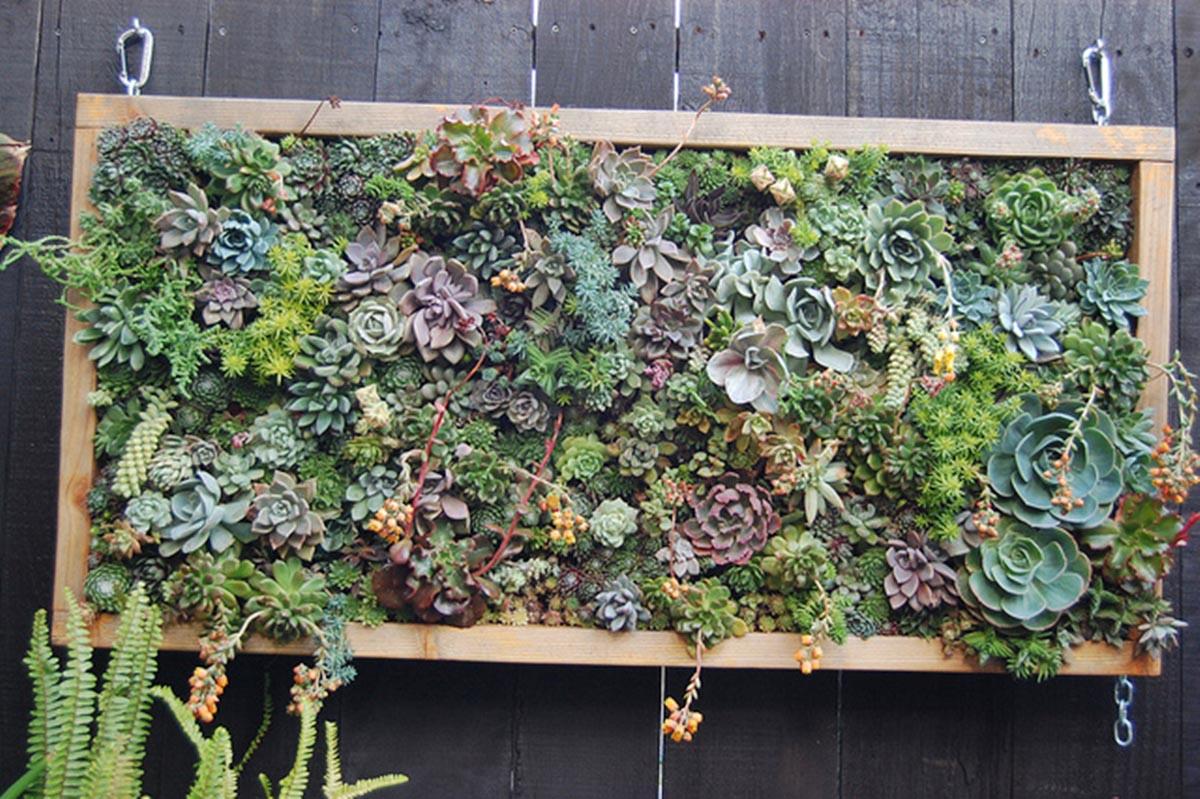 Vertical Garden Plants for Shade