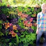 Vertical Garden Plants Shade