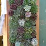Vertical Succulent Garden Grame