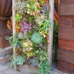 Vertical Succulent Garden Kit