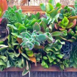 Vertical Succulent Garden Panel