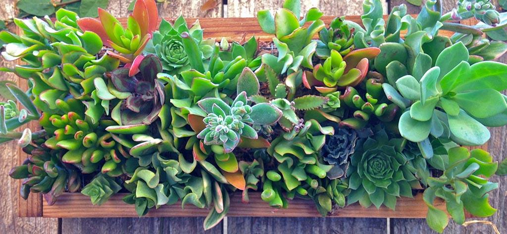 Vertical Succulent Garden Panel