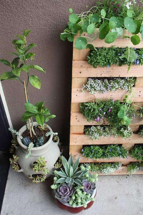 Superior Wall Herb Garden DIY