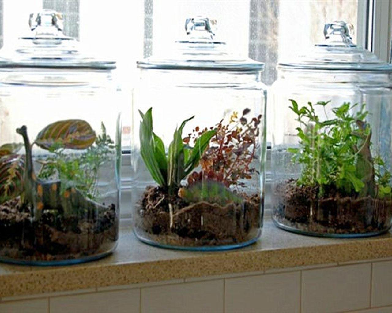 Window Box Herb Garden Indoor