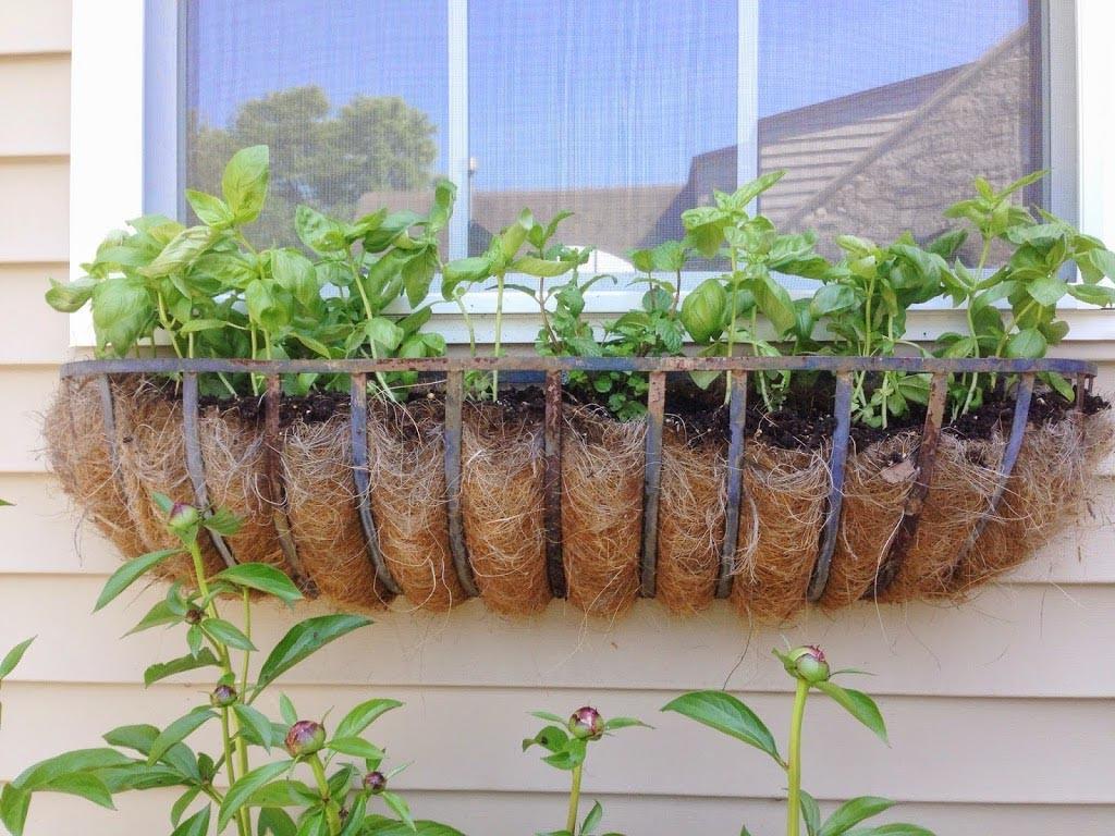 Window Box Herb Garden Kit