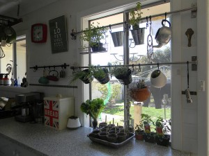 Window Hanging Herb Garden
