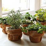 Window Herb Garden Pots