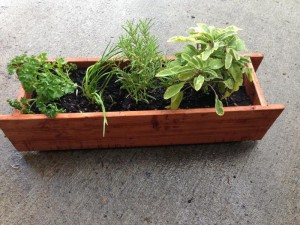 Window Sill Herb Garden Pots