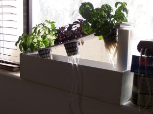 Windowsill Herb Garden DIY