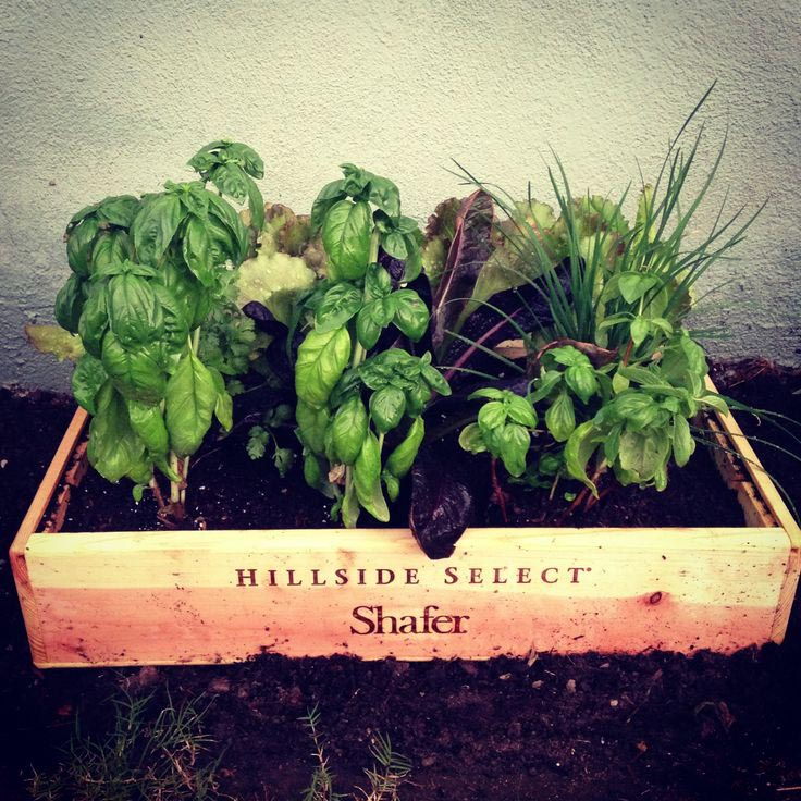 Wine Box Herb Garden Garden Design Ideas