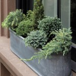 Winter Herb Garden Outdoor