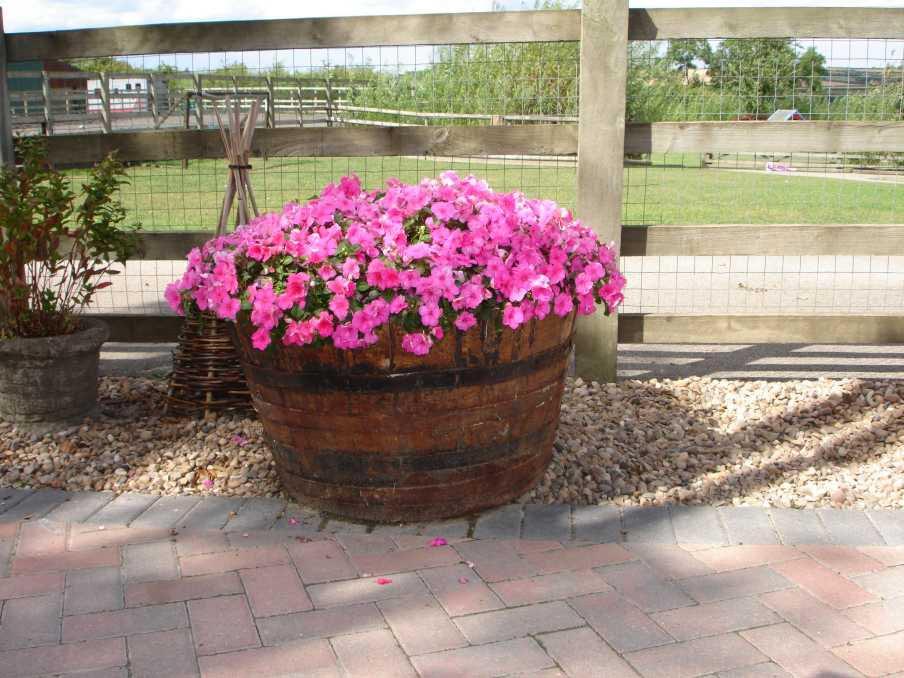 Wooden Barrel Planter Ideas