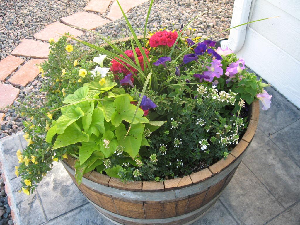 Wooden Whisky Barrel Planters