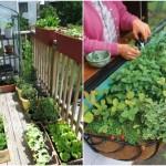 Apartment Patio Vegetable Garden