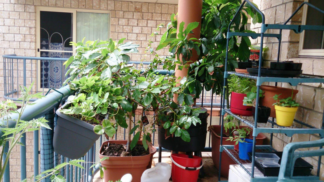Balcony Garden Ideas Vegetables