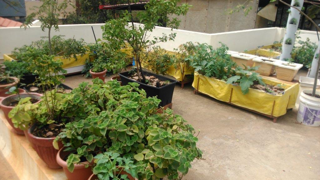 Balcony Vegetable Garden Bangalore