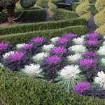 Best Low Maintenance Garden Plants