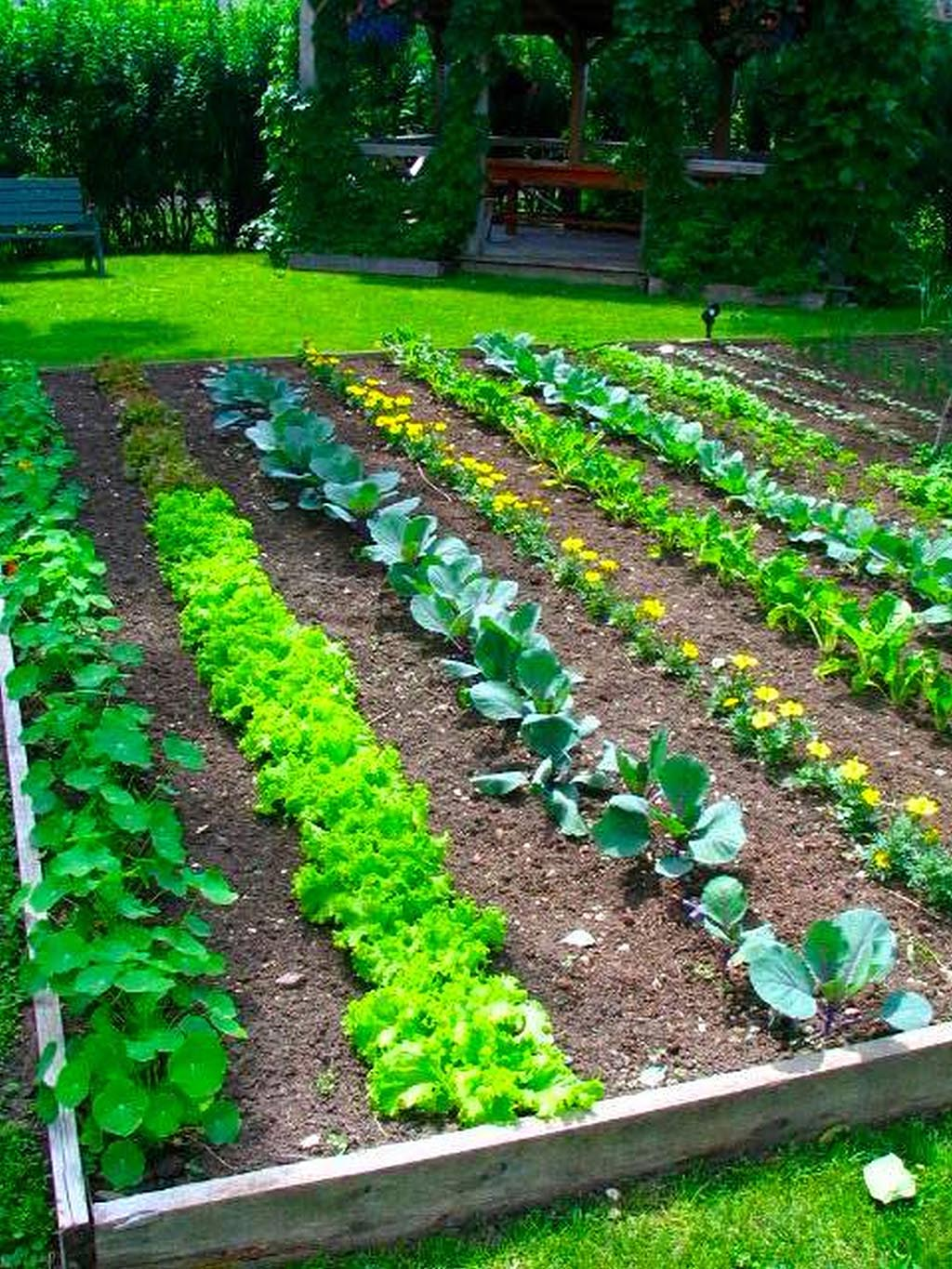 Best Plants for Home Vegetable Garden