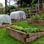 Best Plants for Raised Bed Vegetable Garden
