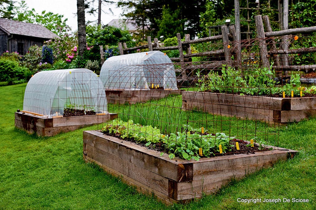 Best Plants For Raised Bed Vegetable Garden Garden
