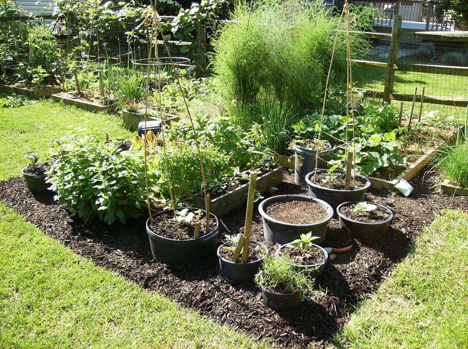 Best Soil for Vegetable Garden in Containers
