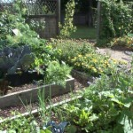 Best Vegetable Garden Tips