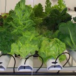 Best Vegetables for Indoor Gardening