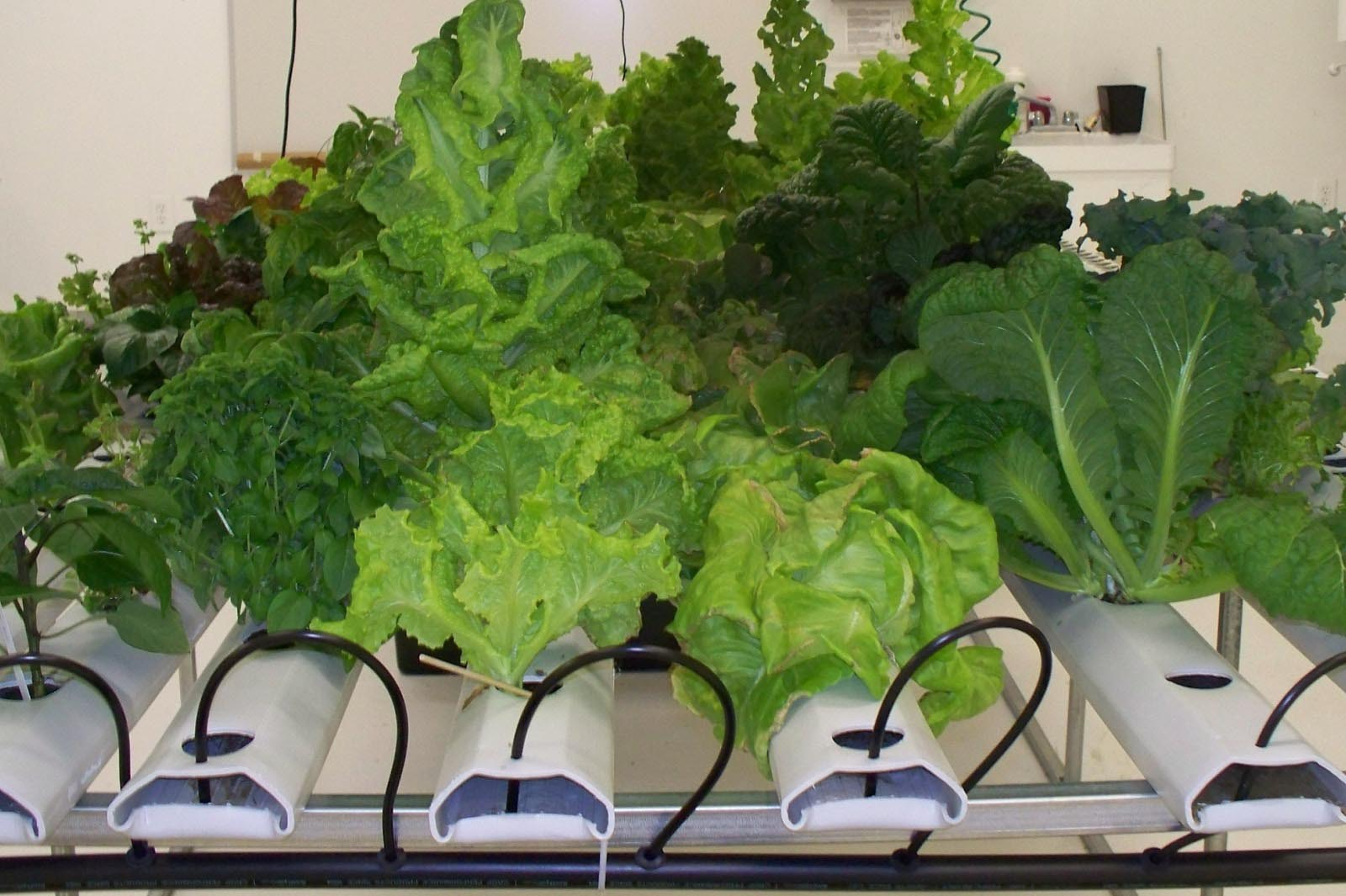 Best vegetables for indoor gardening garden design ideas for Indoor vegetable gardening tips