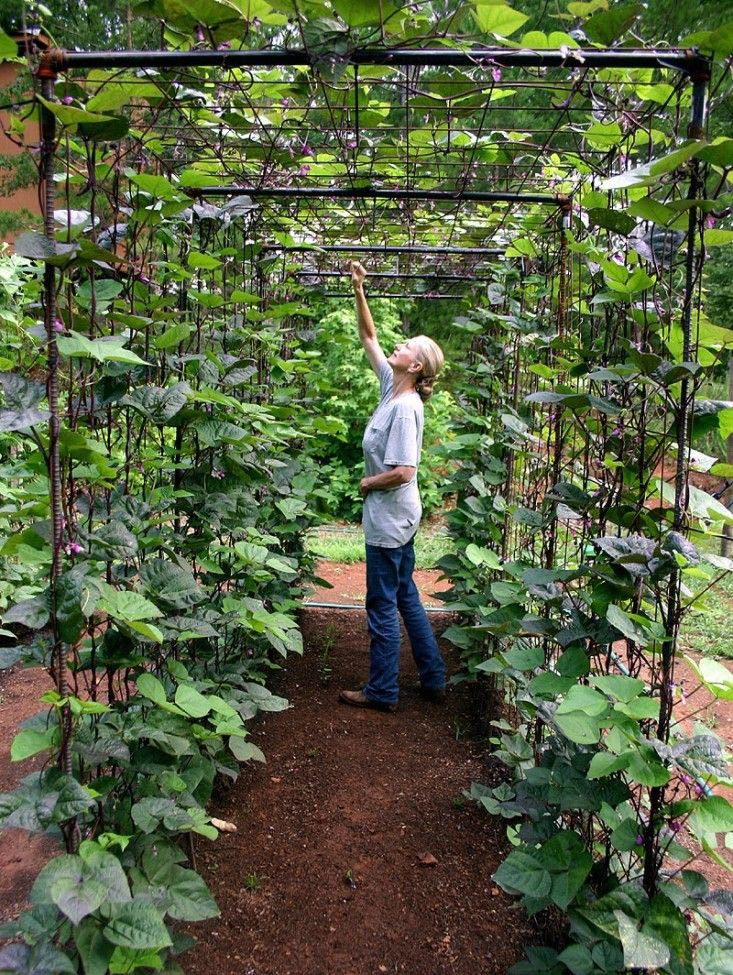 Best Way to Plant a Small Vegetable Garden