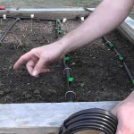 Best Way to Water Raised Vegetable Garden