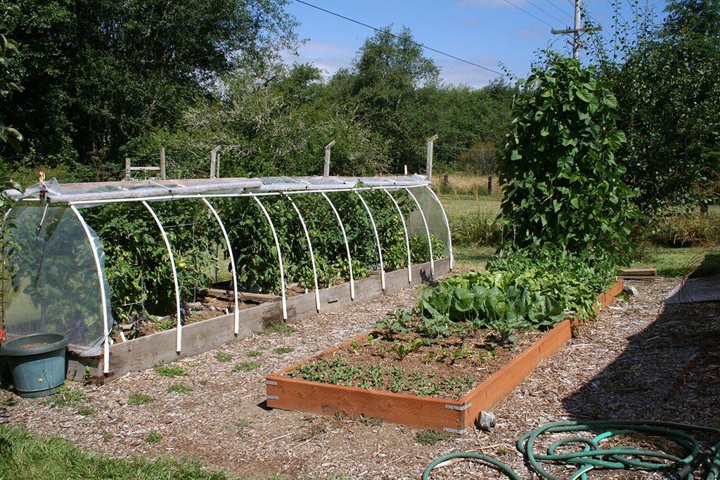 Best Wood for Raised Bed Vegetable Garden