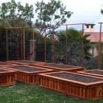 Best Wood for Raised Vegetable Garden