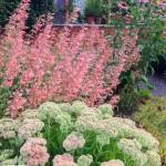 BHG Garden Plans Full Sun